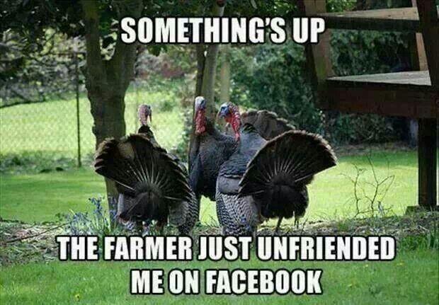 Thanksgiving-Turkey-Meme-1